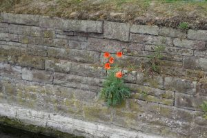 Remembrance Day | Blog